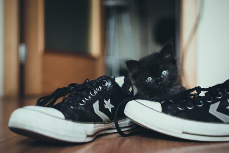 вакцинация (прививки) котят и щенков