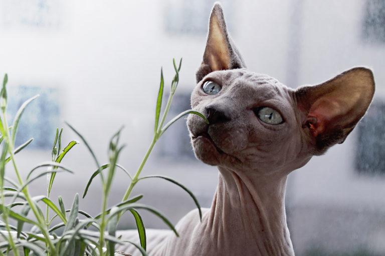 отравление кошки